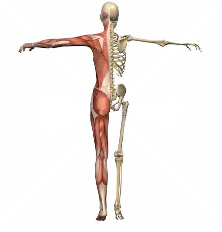 dolori muscoli cervicali.jpg